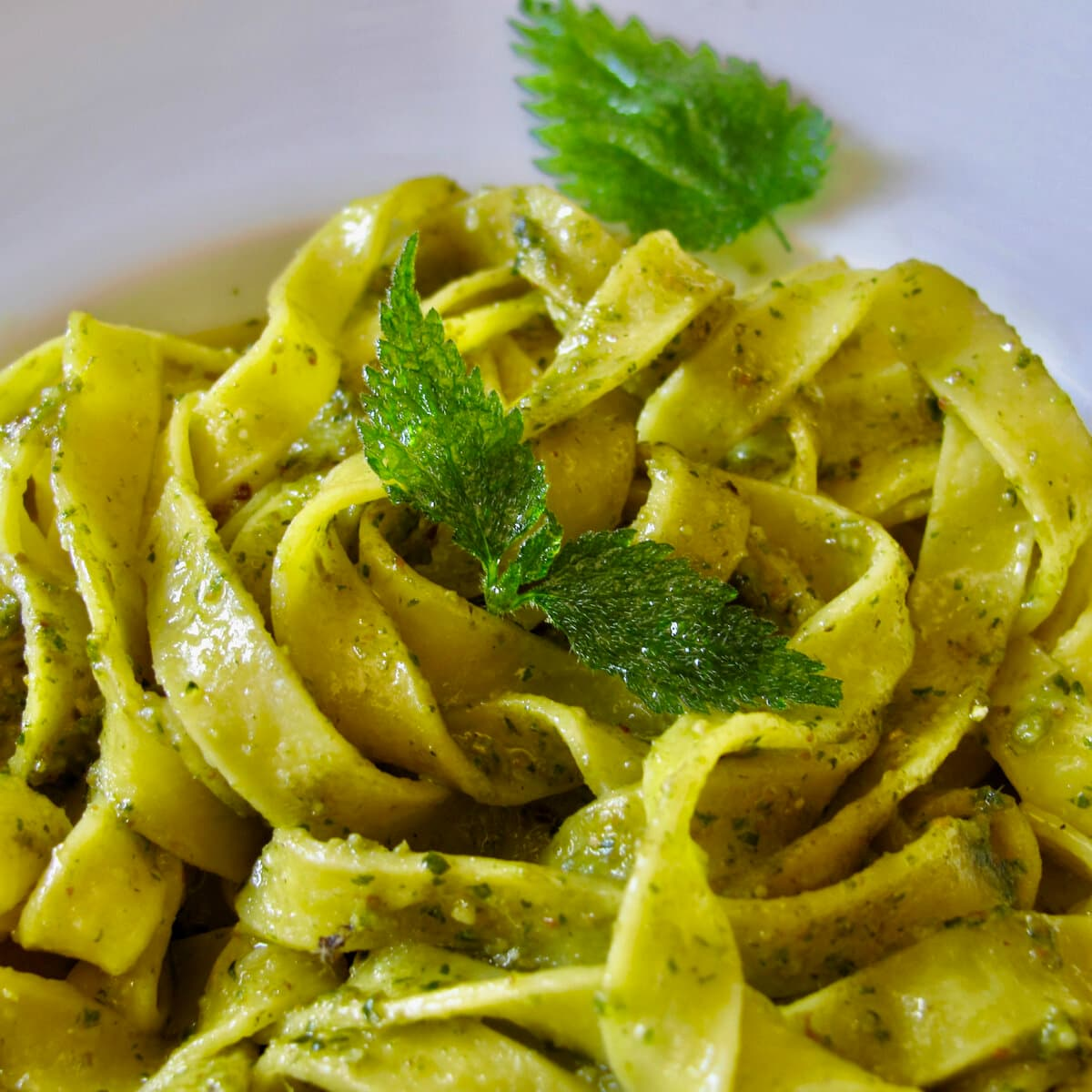 nettle pesto tossed in pasta with fried nettle leaves