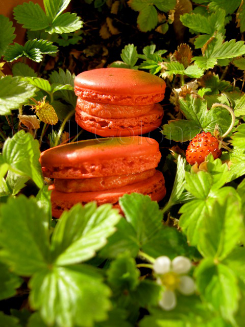 wild strawberry macarons