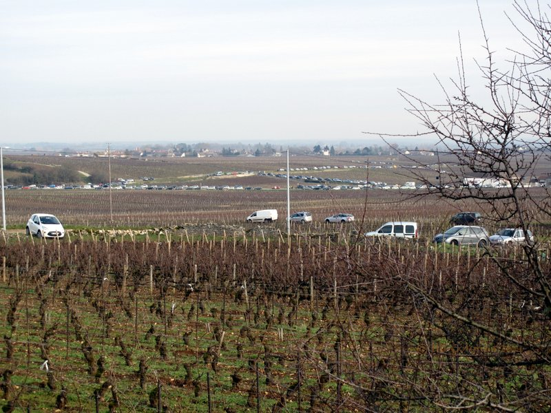 St Aubin vineyards January